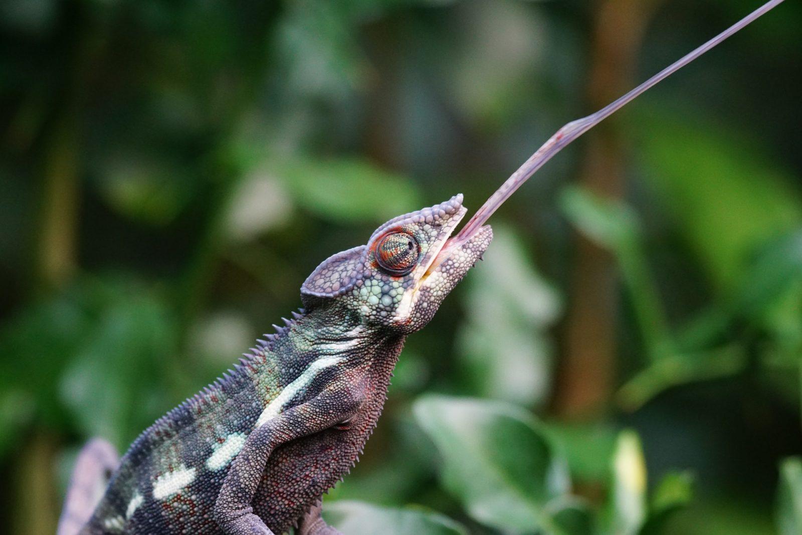 Efekt kameleona, czyli po co naśladujemy innych ludzi?